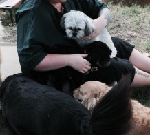 dog boarding, boarding kennels, cat boarding kennel, dog boarding kennel, allen tx, mckinney tx, plano tx, fairview tx