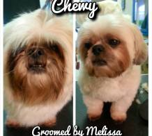 dog grooming, dog groomers, dog groomer, dog haircuts, dog bathing, dog grooming salons, de-shedding treatments, allen tx, plano tx, mckinney tx, fairview tx