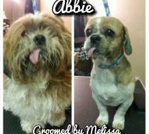 dog grooming, dog groomers, dog groomer, dog haircuts, dog bathing, dog grooming salons, de-shedding treatments, allen tx, plano tx, mckinney tx, fairview tx